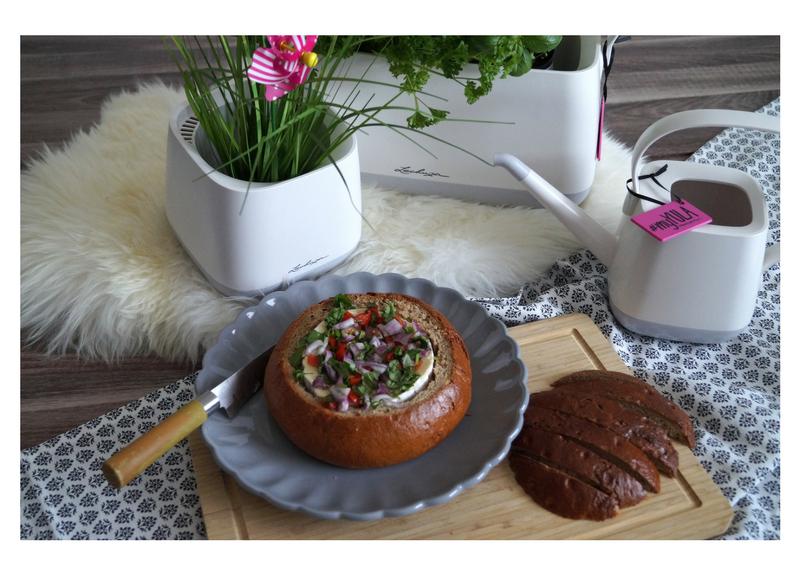 YULA Pflanzgefäße Käsefondue im Brotlaib