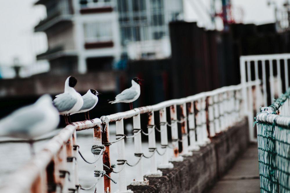 Trip nach Cuxhaven